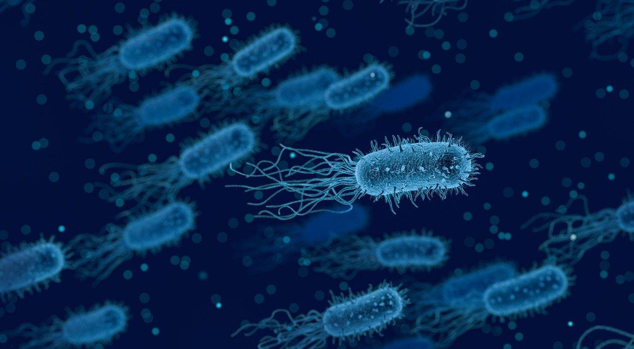 Bakterie, roztoči a plísně v matraci – pořiďte si novou!