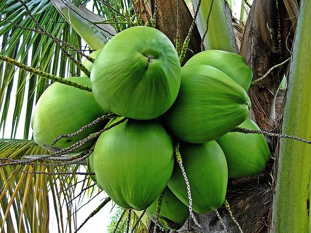 Kokos na matrace