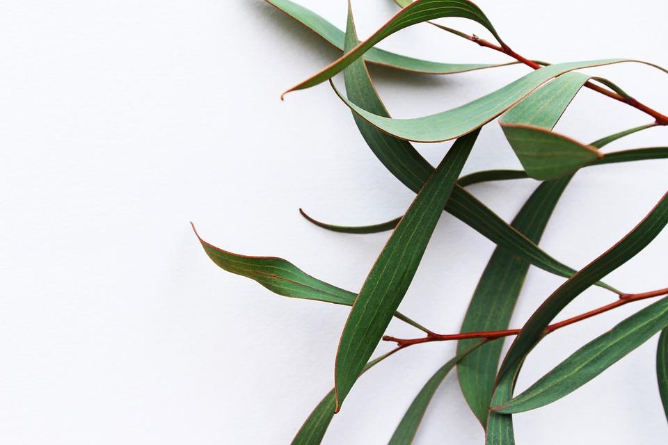 Hľadáte matrac pre zdravý spánok? Skúste eukalyptus!